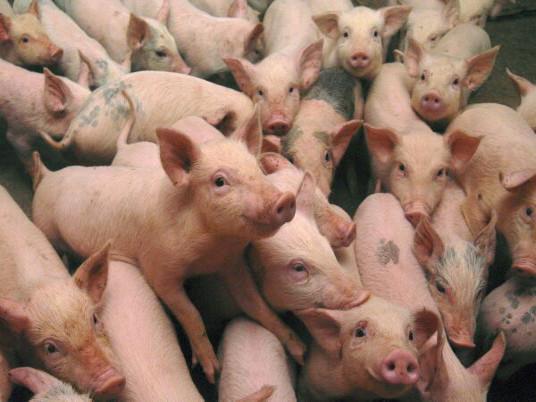 Profitable Pork - cover